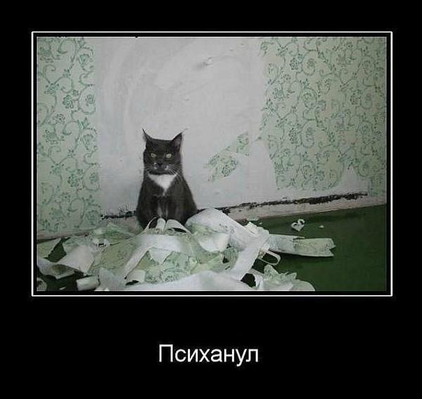 http://www.anekdotov-mnogo.ru/image-prikol/smeshnie_kartinki_134928682403102012931.jpg