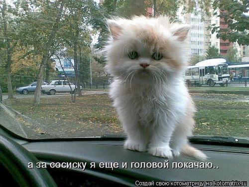 http://www.anekdotov-mnogo.ru/image-prikol/smeshnie_kartinki_135031539115102012.jpg