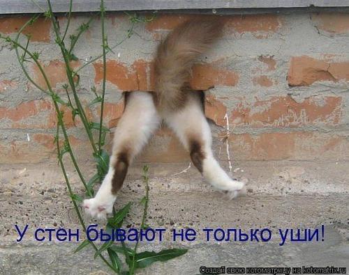 http://www.anekdotov-mnogo.ru/image-prikol/smeshnie_kartinki_135031540515102012.jpg