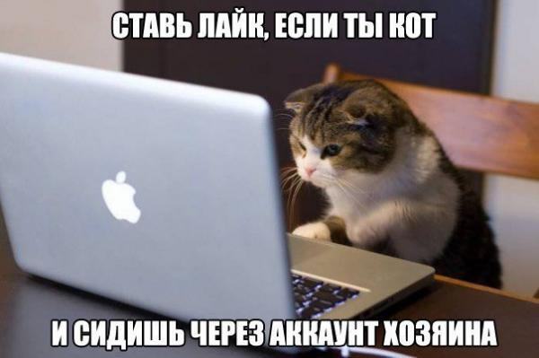 http://www.anekdotov-mnogo.ru/image-prikol/smeshnie_kartinki_1350498181171020121358.jpg