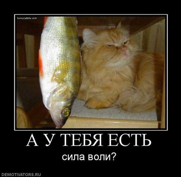 http://www.anekdotov-mnogo.ru/image-prikol/smeshnie_kartinki_1350648627191020122756.jpg