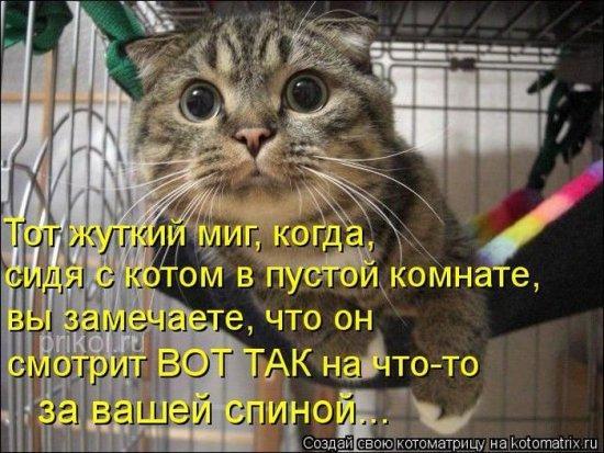 http://www.anekdotov-mnogo.ru/image-prikol/smeshnie_kartinki_1350673905191020121157.jpg