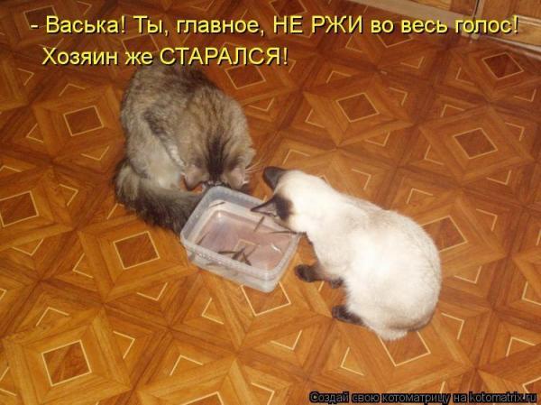 http://www.anekdotov-mnogo.ru/image-prikol/smeshnie_kartinki_135084296821102012359.jpg