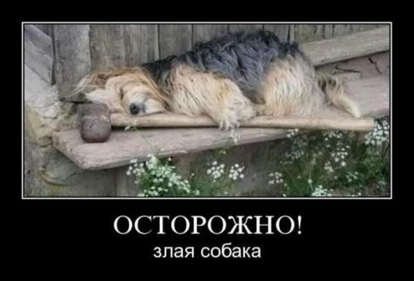 http://www.anekdotov-mnogo.ru/image-prikol/smeshnie_kartinki_1351058643241020121941.jpg