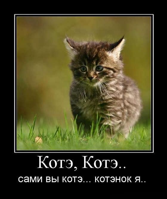 http://www.anekdotov-mnogo.ru/image-prikol/smeshnie_kartinki_135118436125102012614.jpg