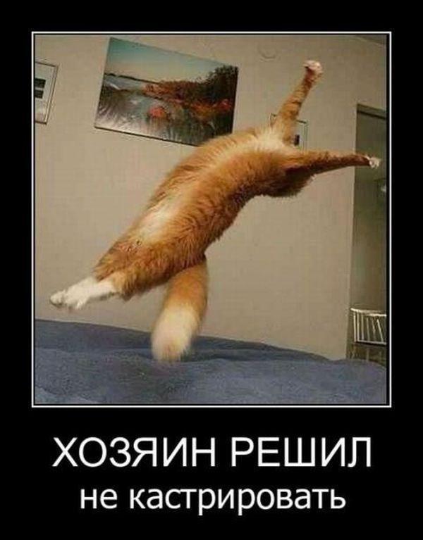 http://www.anekdotov-mnogo.ru/image-prikol/smeshnie_kartinki_135118448025102012747.jpg