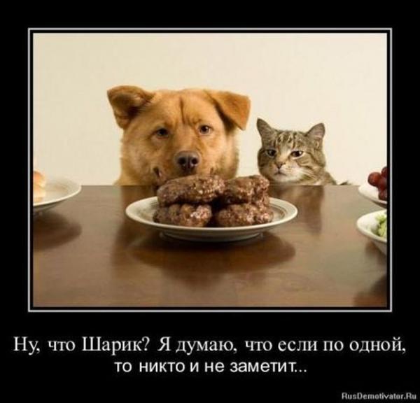 http://www.anekdotov-mnogo.ru/image-prikol/smeshnie_kartinki_135118448025102012848.jpg