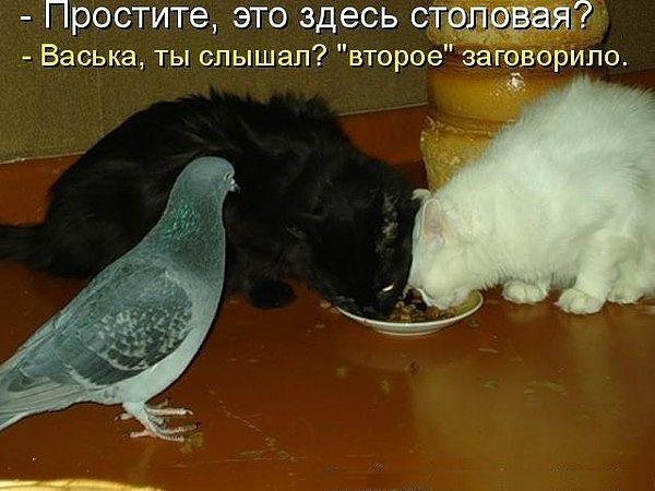 http://www.anekdotov-mnogo.ru/image-prikol/smeshnie_kartinki_1351282275271020121113.jpg
