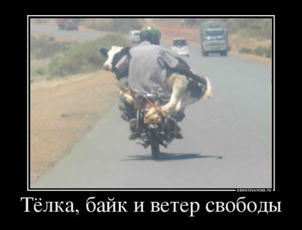 http://www.anekdotov-mnogo.ru/image-prikol/smeshnie_kartinki_135141233428102012667.jpg