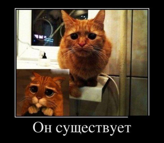 http://www.anekdotov-mnogo.ru/image-prikol/smeshnie_kartinki_1351610611301020122890.jpg