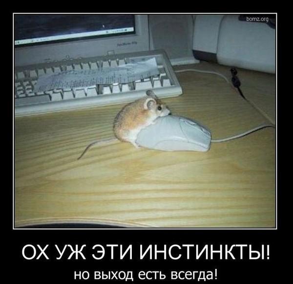 http://www.anekdotov-mnogo.ru/image-prikol/smeshnie_kartinki_1351893218031120121474.jpg