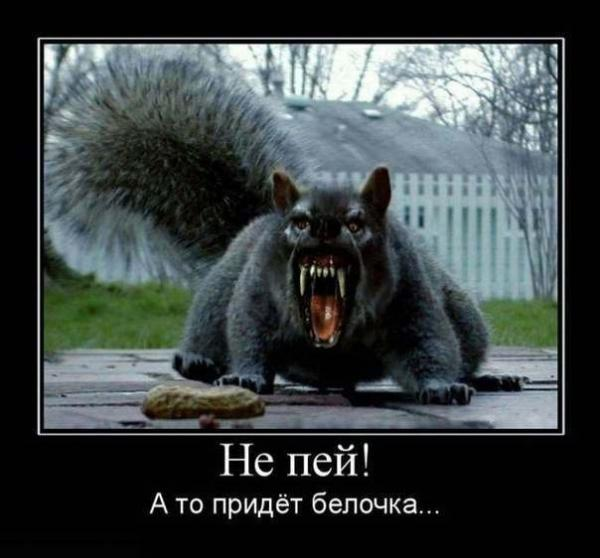http://www.anekdotov-mnogo.ru/image-prikol/smeshnie_kartinki_1352098758051120122633.jpg
