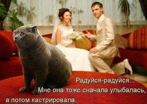 http://www.anekdotov-mnogo.ru/image-prikol/smeshnie_kartinki_1352176229061120122676.jpg