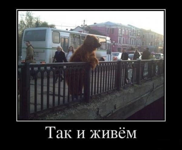 http://www.anekdotov-mnogo.ru/image-prikol/smeshnie_kartinki_1352323403081120122028.jpg