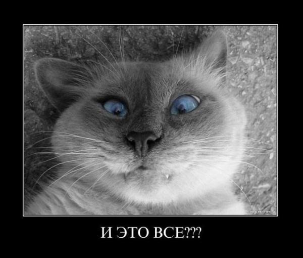 http://www.anekdotov-mnogo.ru/image-prikol/smeshnie_kartinki_1352498957101120122605.jpg