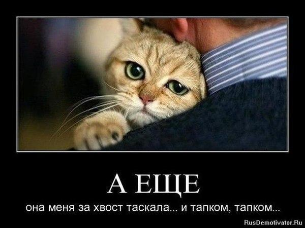 http://www.anekdotov-mnogo.ru/image-prikol/smeshnie_kartinki_1352710824121120122679.jpg