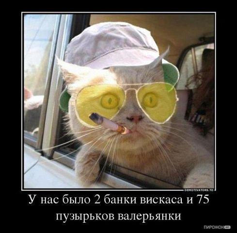 http://www.anekdotov-mnogo.ru/image-prikol/smeshnie_kartinki_1352737712121120122176.jpg