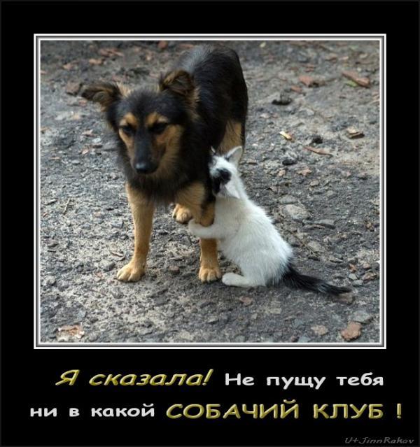 http://www.anekdotov-mnogo.ru/image-prikol/smeshnie_kartinki_1352819783131120122260.jpg