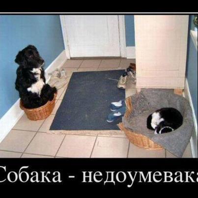 http://www.anekdotov-mnogo.ru/image-prikol/smeshnie_kartinki_135360768722112012.jpg