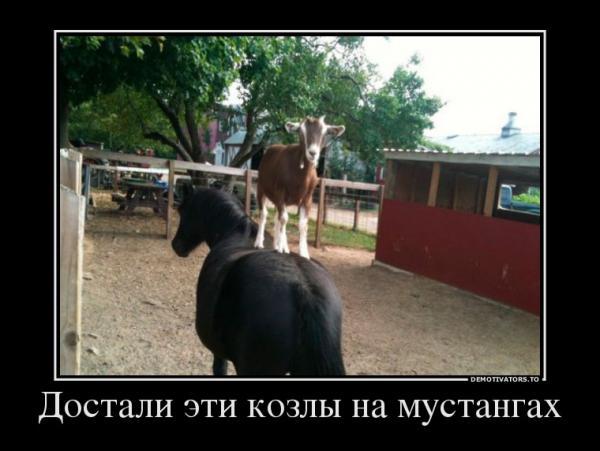 http://www.anekdotov-mnogo.ru/image-prikol/smeshnie_kartinki_1353609208221120121746.jpg