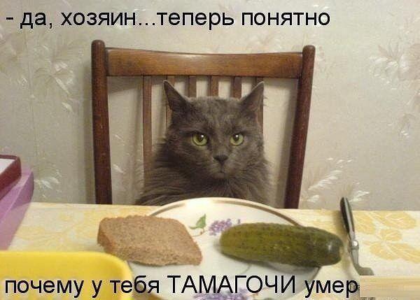 http://www.anekdotov-mnogo.ru/image-prikol/smeshnie_kartinki_135426164430112012641.jpg