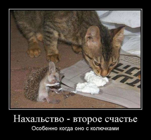 http://www.anekdotov-mnogo.ru/image-prikol/smeshnie_kartinki_1354623899041220121404.jpg