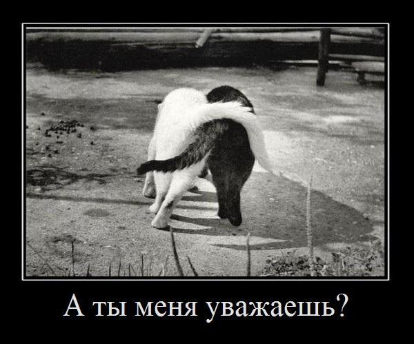 http://www.anekdotov-mnogo.ru/image-prikol/smeshnie_kartinki_1354951215081220121324.jpg