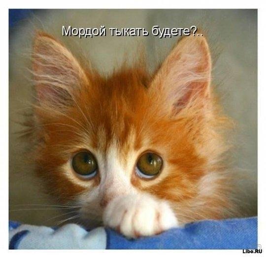 http://www.anekdotov-mnogo.ru/image-prikol/smeshnie_kartinki_135516268610122012114.jpg