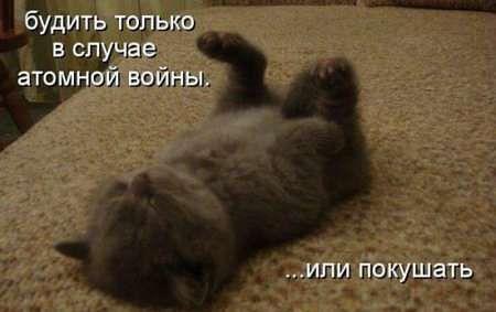 http://www.anekdotov-mnogo.ru/image-prikol/smeshnie_kartinki_135523829211122012877.jpg