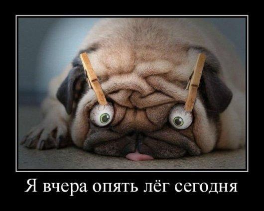 http://www.anekdotov-mnogo.ru/image-prikol/smeshnie_kartinki_1355512955141220122031.jpg