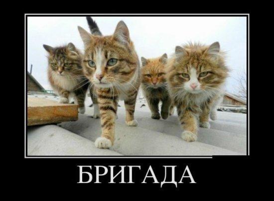 http://www.anekdotov-mnogo.ru/image-prikol/smeshnie_kartinki_135566220516122012852.jpg