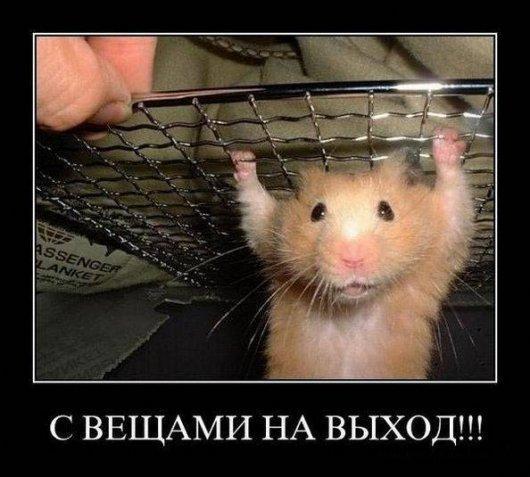 http://www.anekdotov-mnogo.ru/image-prikol/smeshnie_kartinki_1355694574171220121580.jpg
