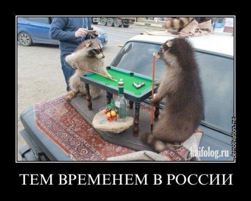 http://www.anekdotov-mnogo.ru/image-prikol/smeshnie_kartinki_135574520317122012769.jpg
