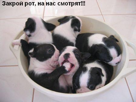 http://www.anekdotov-mnogo.ru/image-prikol/smeshnie_kartinki_1356037836211220122563.jpg