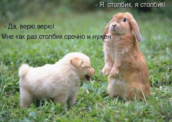 http://www.anekdotov-mnogo.ru/image-prikol/smeshnie_kartinki_1356038007211220122269.jpg