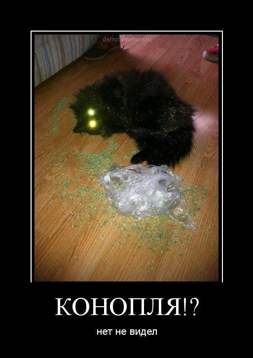 http://www.anekdotov-mnogo.ru/image-prikol/smeshnie_kartinki_135628273823122012634.jpg