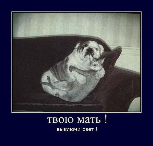 http://www.anekdotov-mnogo.ru/image-prikol/smeshnie_kartinki_1356317323241220122616.jpg