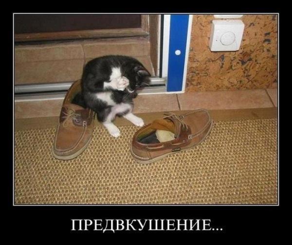 http://www.anekdotov-mnogo.ru/image-prikol/smeshnie_kartinki_135639815325122012141.jpg