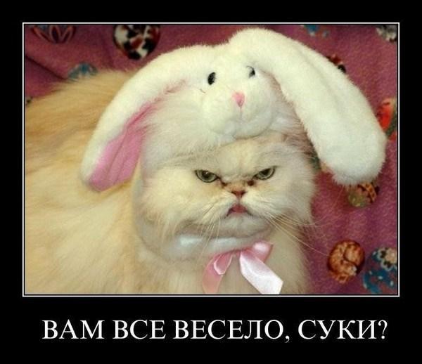 http://www.anekdotov-mnogo.ru/image-prikol/smeshnie_kartinki_1356398219251220121840.jpg