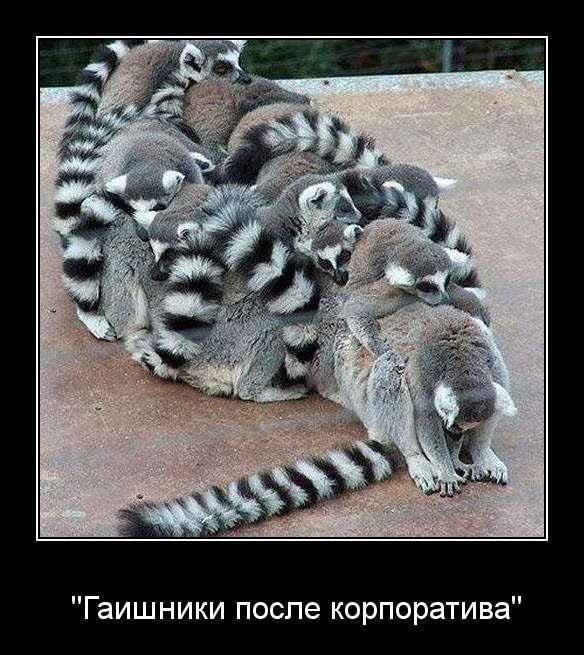 http://www.anekdotov-mnogo.ru/image-prikol/smeshnie_kartinki_135643642425122012409.jpg