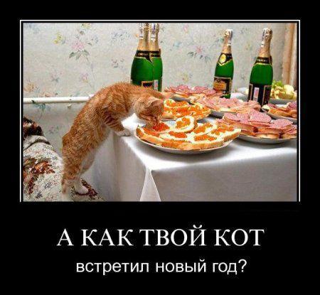 http://www.anekdotov-mnogo.ru/image-prikol/smeshnie_kartinki_1356436705251220122158.jpg