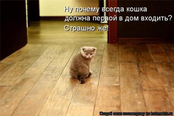 http://www.anekdotov-mnogo.ru/image-prikol/smeshnie_kartinki_1356440379251220122079.jpg