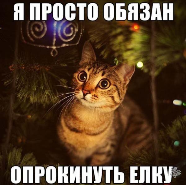 http://www.anekdotov-mnogo.ru/image-prikol/smeshnie_kartinki_1356474141261220121334.jpg