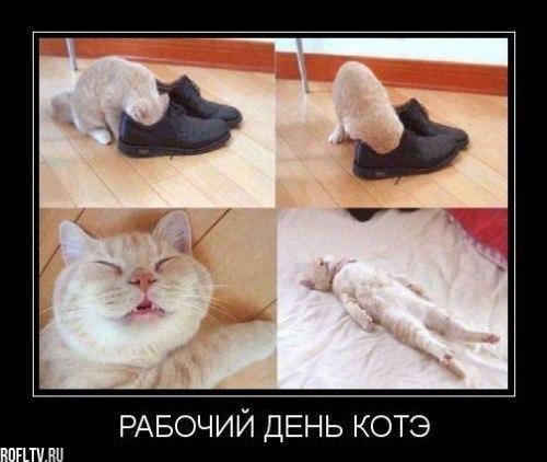 http://www.anekdotov-mnogo.ru/image-prikol/smeshnie_kartinki_1356533506261220121834.jpg