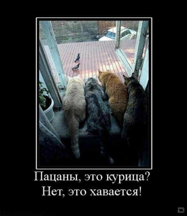 http://www.anekdotov-mnogo.ru/image-prikol/smeshnie_kartinki_1356907018311220122838.jpg