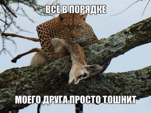 http://www.anekdotov-mnogo.ru/image-prikol/smeshnie_kartinki_1356912830311220122627.jpg