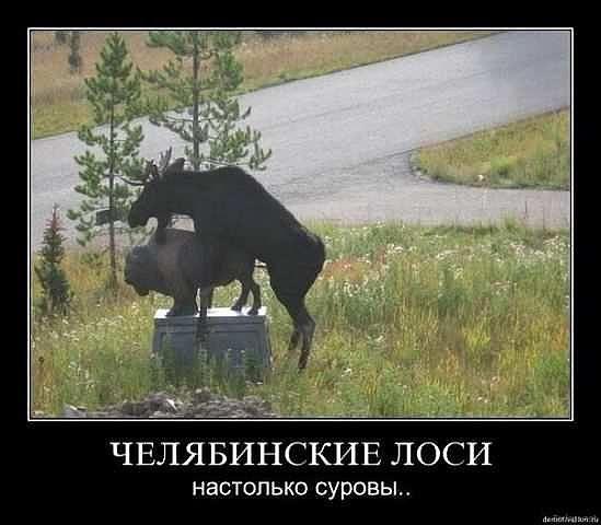 http://www.anekdotov-mnogo.ru/image-prikol/smeshnie_kartinki_135705154901012013510.jpg