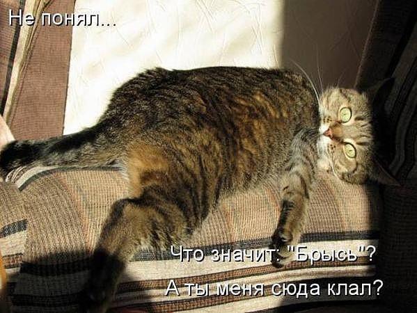 http://www.anekdotov-mnogo.ru/image-prikol/smeshnie_kartinki_1357293802040120131897.jpg