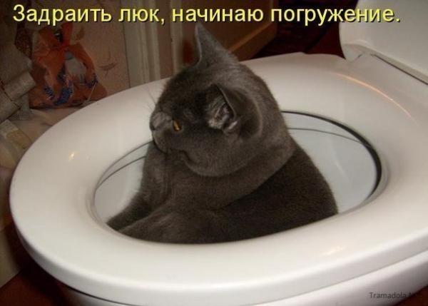http://www.anekdotov-mnogo.ru/image-prikol/smeshnie_kartinki_1357435435060120132101.jpg