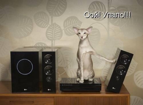 http://www.anekdotov-mnogo.ru/image-prikol/smeshnie_kartinki_1357435435060120132748.jpg